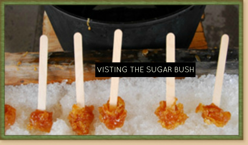 Visiting The Sugar Bush